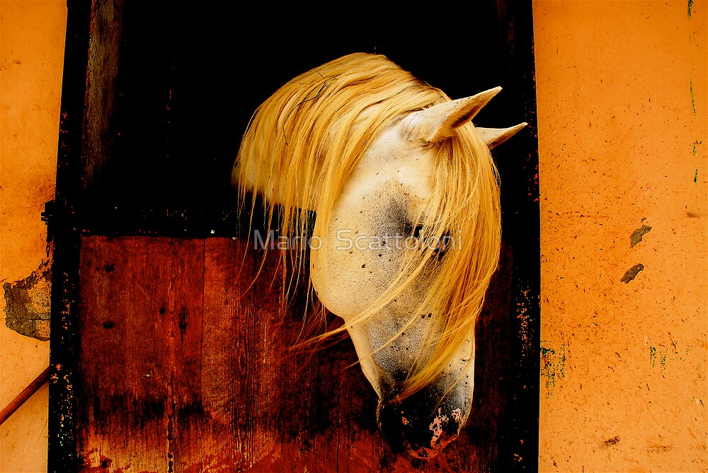 Ibero, a horse I met recently & deserved better by Mario  Scattoloni