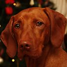 Christmas Vizsla by the tree by Tracey Pacitti