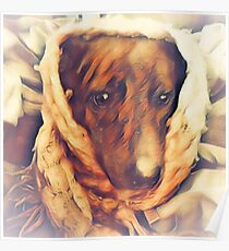 Brindi the Mountain Cur Poster