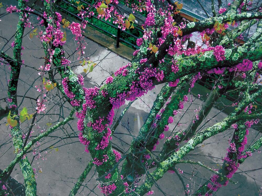 in bloom by carollei