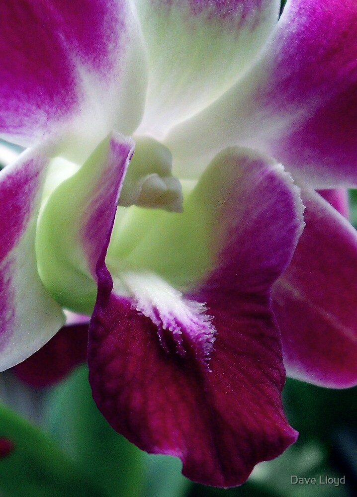 Purple Glory by Dave Lloyd