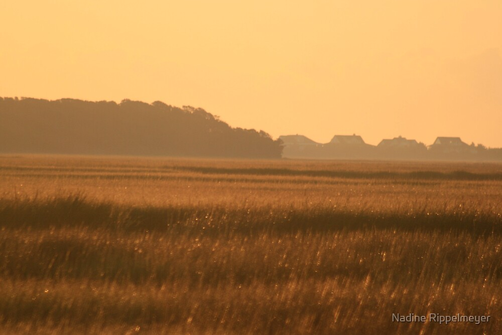 Golden Marshes by Nadine Rippelmeyer