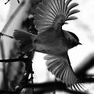 Call Me Eagle by hynek