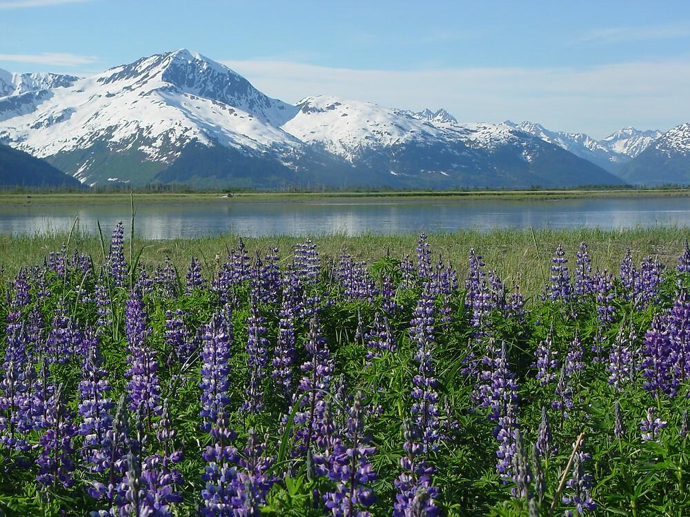 Alaska In Bloom by Selena Dittberner