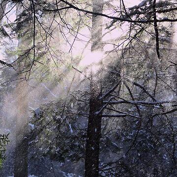 Glistening Snow by vigor