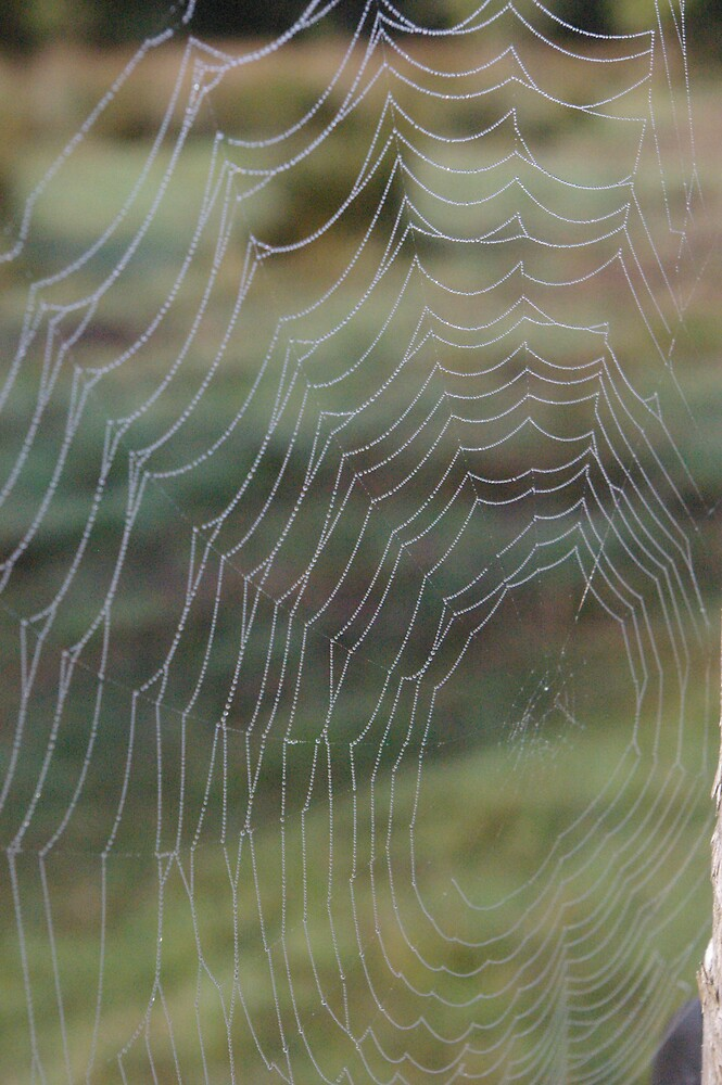 the web of life by Harry Hutchin