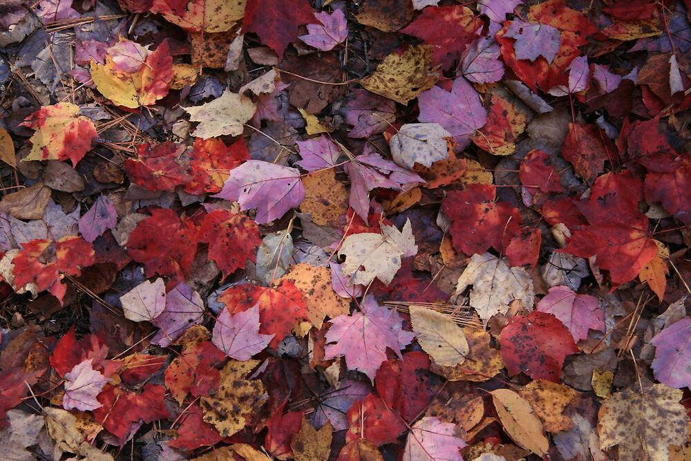 Autumn Leaves  by Selena Dittberner