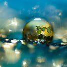 Twinkle Twinkle  by Sherstin Schwartz
