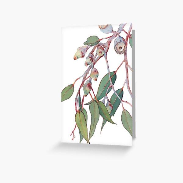Australian native eucalyptus tree branch Greeting Card