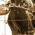 The Brown Cow by DottieDees