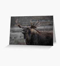 Sneezing Moose Greeting Card