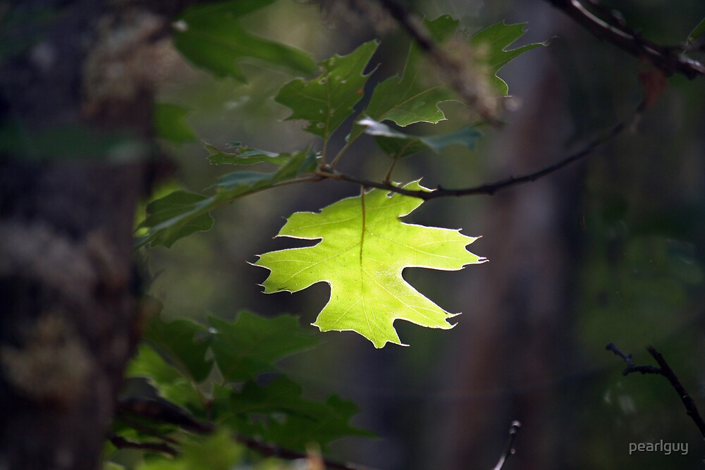 Leaves by pearlguy
