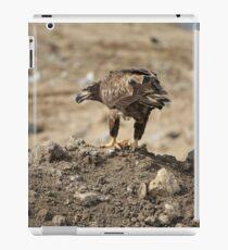 Juvenile Bald Eagle Feeding iPad Case/Skin