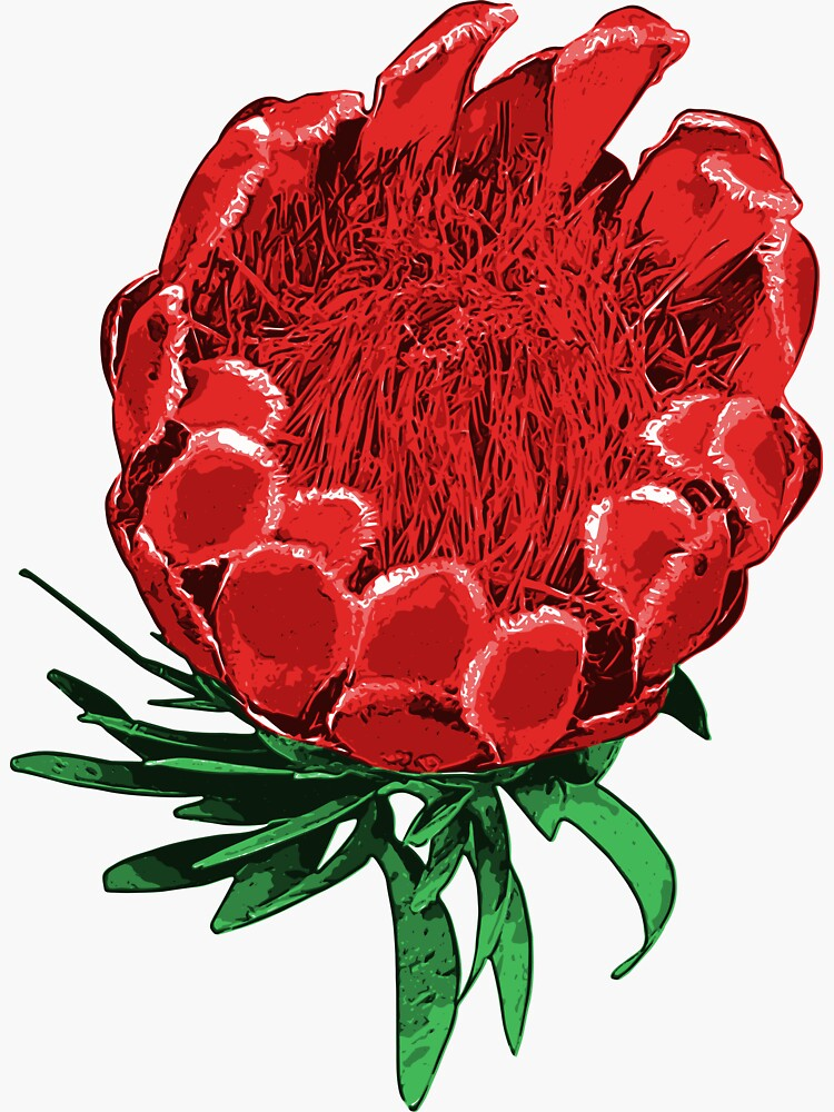 Beautiful Protea Illustration - Lovely Australian Native Flower by annaleebeer