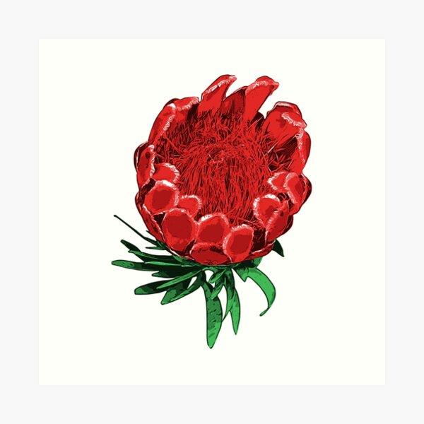 Beautiful Protea Illustration - Lovely Australian Native Flower Art Print