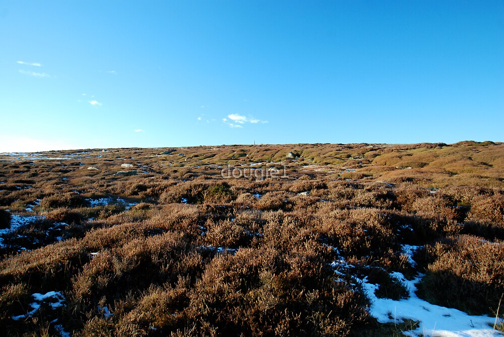 Lealhome Moor by dougie1