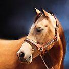 Golden Buckskin Quarterhorse on Blue by Michelle Wrighton