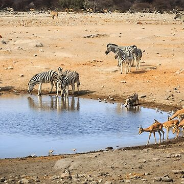 Drinking at the Waterhole by Frogvision