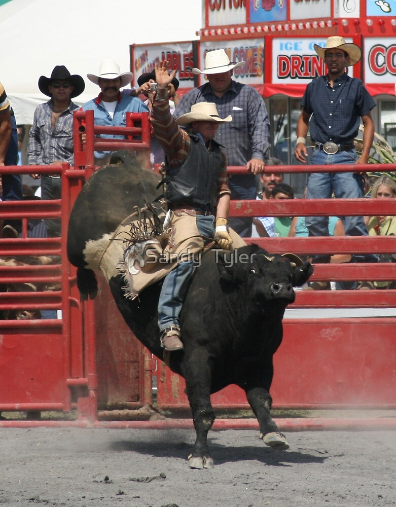 Bull rider hanging on. by Sandy  Tyler