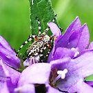spider by Monica Di Carlo