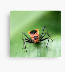 Orange Crawler Canvas Print