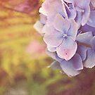 Purple Hydrangea flower. by Lyn  Randle