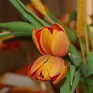 Tulip Twins by MiLa