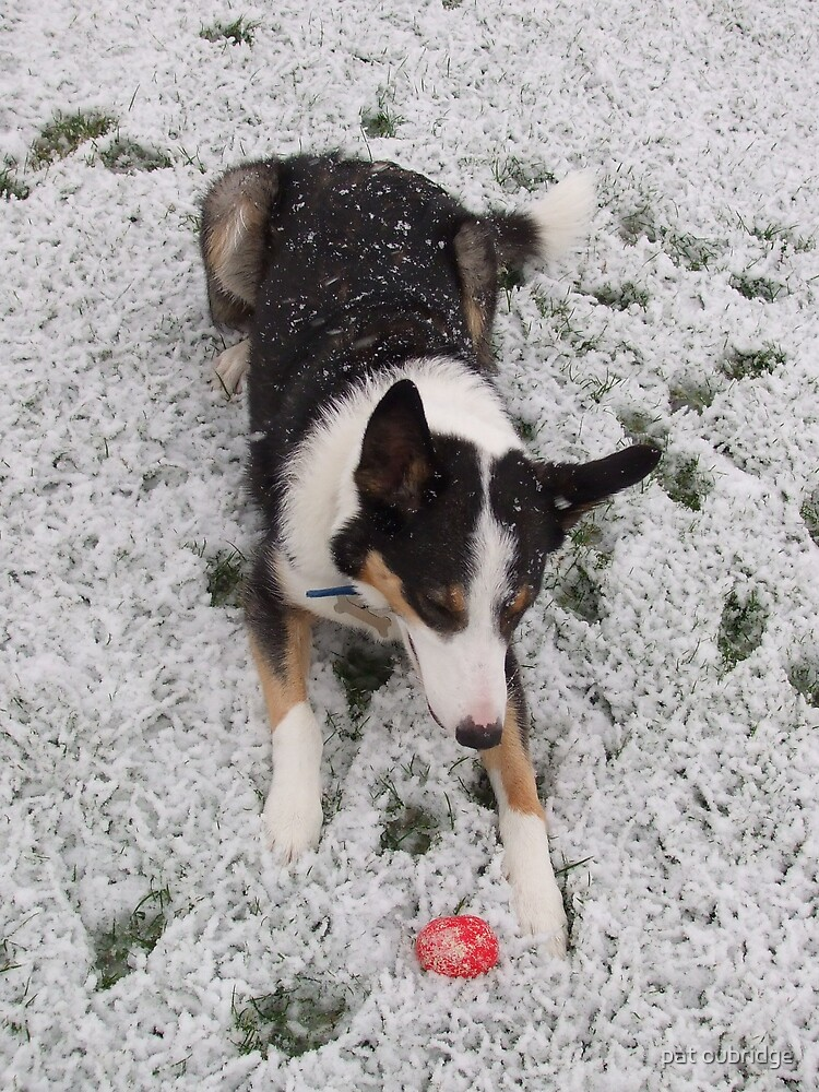 Snow Ball by pat oubridge