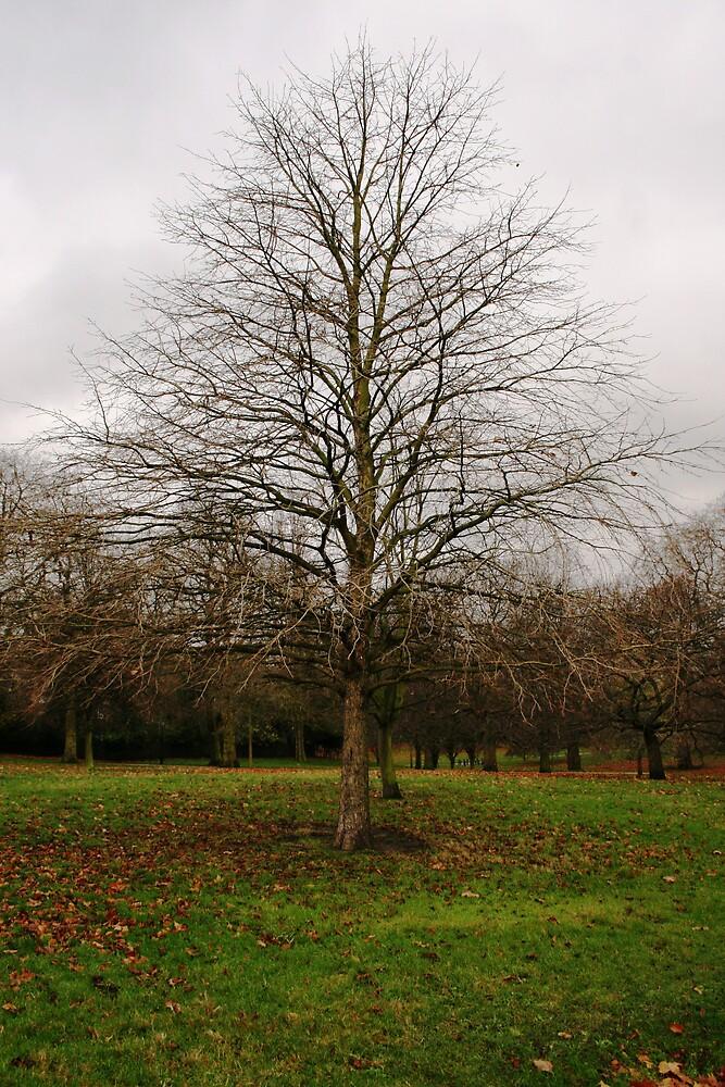 Tree in Hyde Park by Tarryn Godfrey