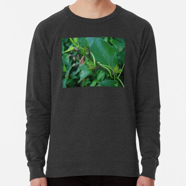 Green Leaf and Vines Lightweight Sweatshirt