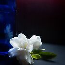 Gardenia flower and blue bottle by Silvia Ganora