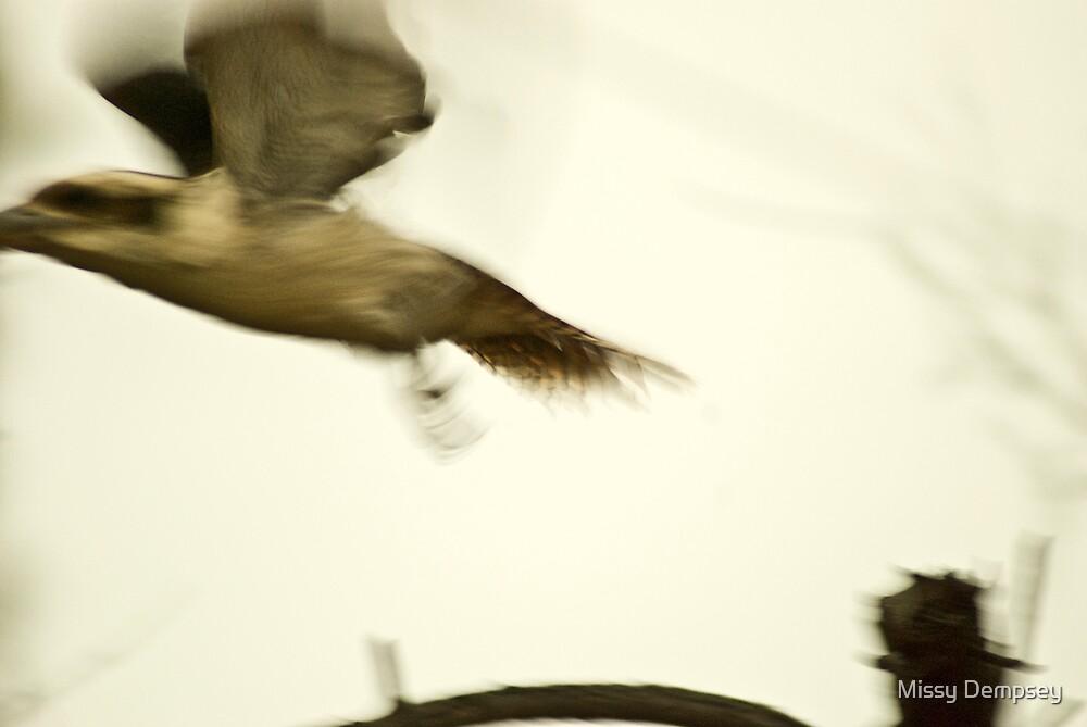 Kookaburra by Missy Dempsey
