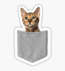 Bengal Cat In Pocket Sticker