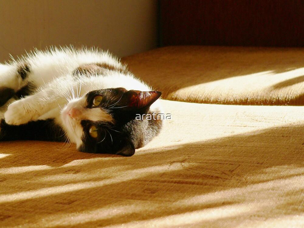 Basking in the sun by aratma