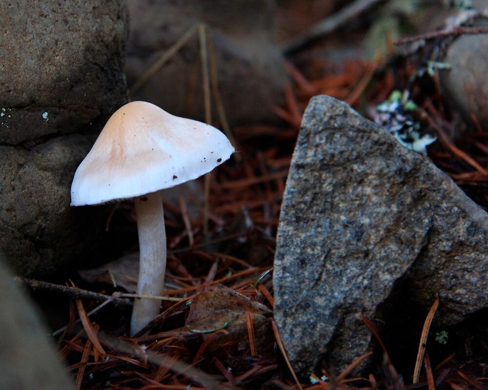 Alice's Hidden Mushroom by Tim Eyre