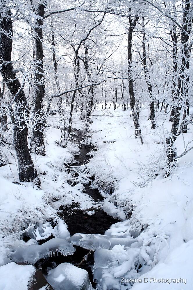 Frozen forest by Zuzana D Photography