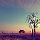 Two trees by Mel Brackstone