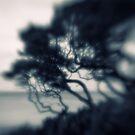 Blowing in the wind by Mel Brackstone