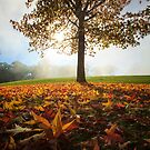Autumn colour by Mel Brackstone