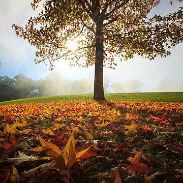 Autumn colour by MelBrackstone