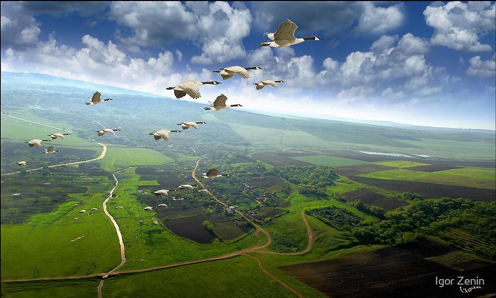 Freedom by Igor Zenin