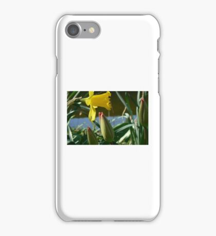 spring whispers-obeydance to the sun iPhone Case/Skin