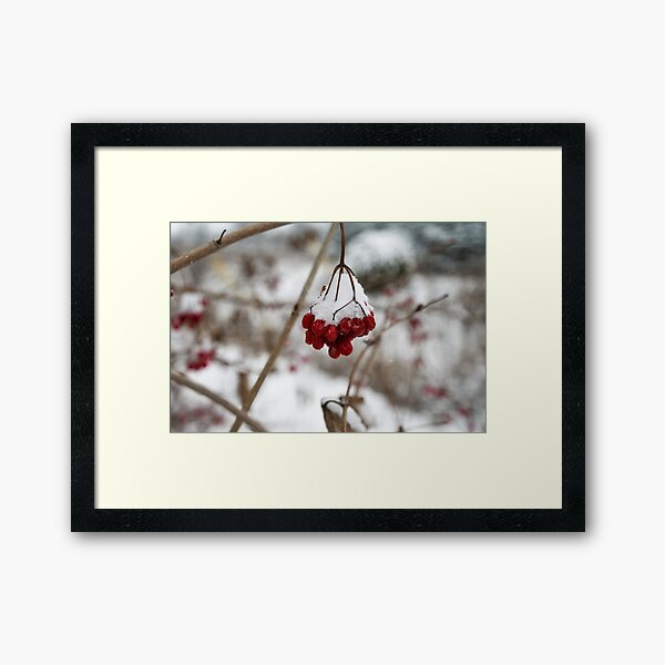 Winter berries Framed Art Print