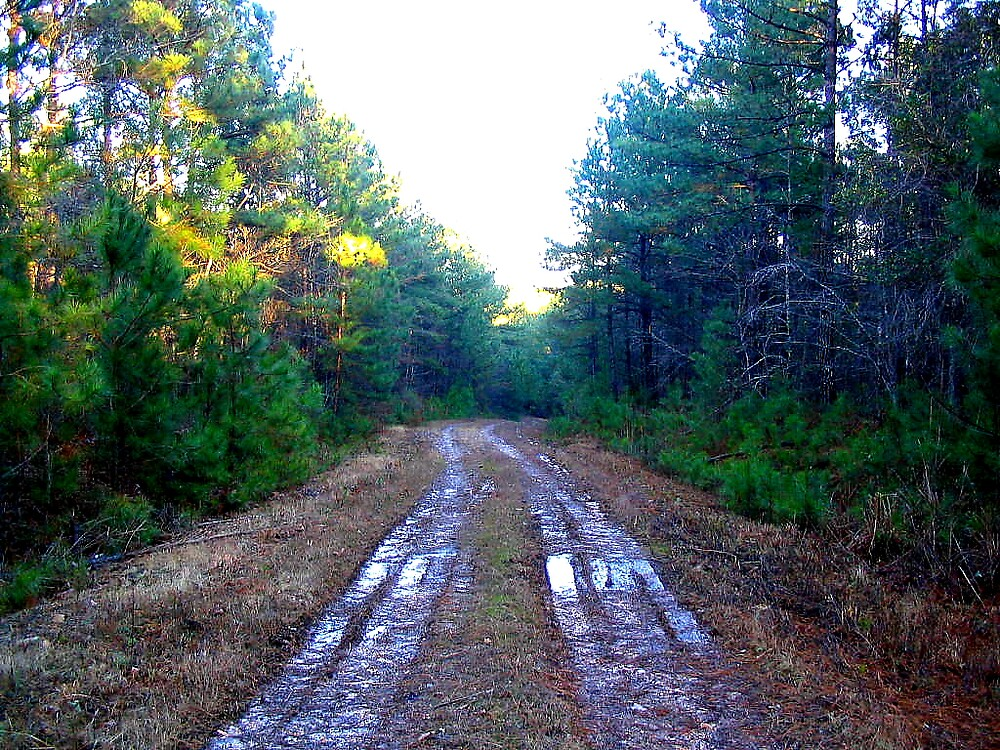 Muddy Logging Road by Mudd
