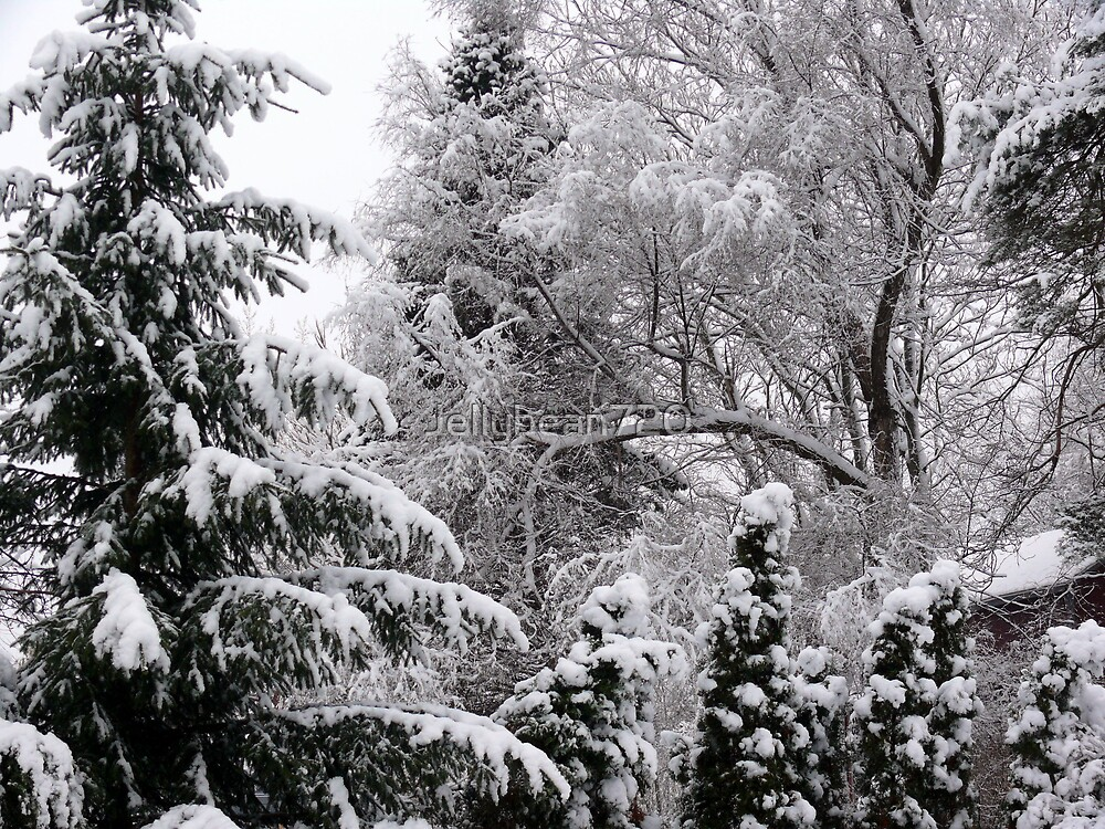 Snow covered tree's  by Jellybean720