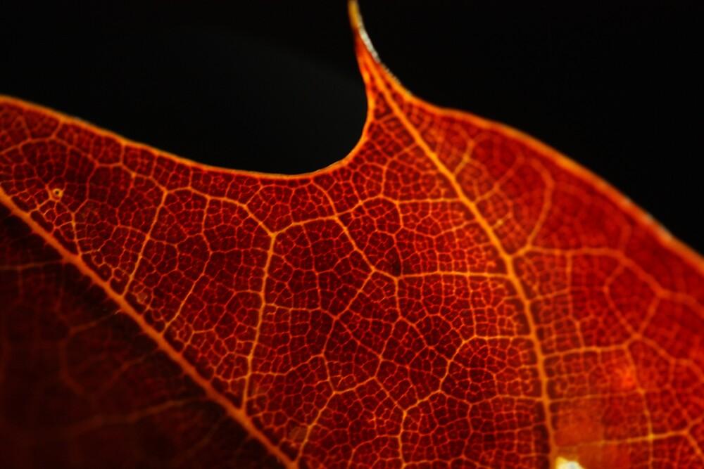Red leaf by Abigail Allardyce