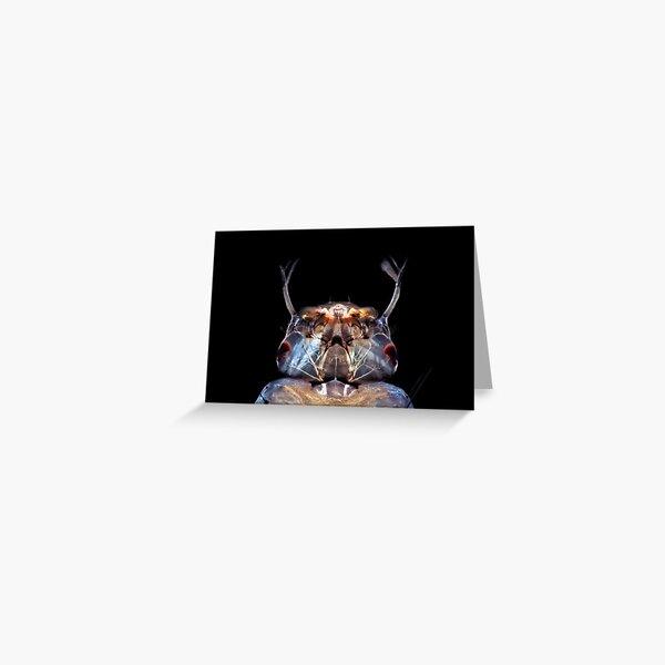 Mosquitolarva head Greeting Card