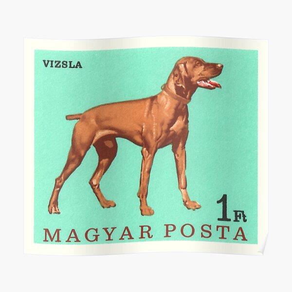 1967 Hungary Vizsla Dog Postage Stamp Poster