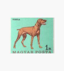 1967 Hungary Vizsla Dog Postage Stamp Art Board