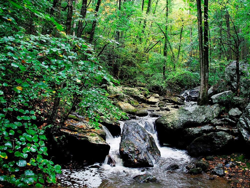 Smith Creek Falls by Francesa